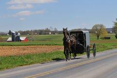 Amish häst och barnvagn Arkivbilder