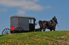 Amish häst och barnvagn Royaltyfri Fotografi
