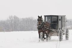 Amish häst och barnvagn, snö, storm royaltyfri foto