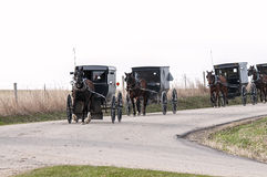 Amish häst och buggys Arkivbilder