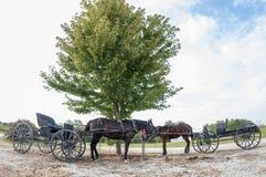 Amish hästar och hackor royaltyfri fotografi