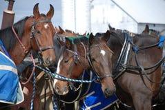 Amish hästar tjudrade nära ladugård Royaltyfri Bild