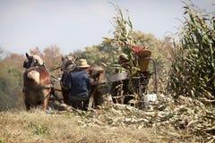 Amish höstskörd royaltyfri foto