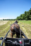 Amish hack in a hay field. Driving a Amish horse-drawn hack in a hay field Stock Images