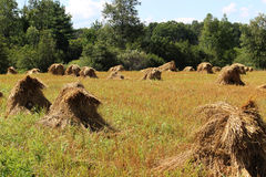 Amish Hay Stacks Royalty Free Stock Photography