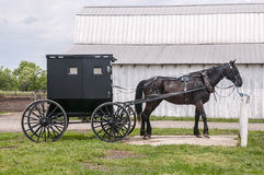 Free Amish Horse And Buggy Stock Photo - 54325830