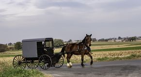 Amish Horse and Buggy 13 stock photography