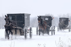 Amish horse and buggy,snow,storm Royalty Free Stock Images