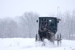 Amish horse and buggy,snow,storm Royalty Free Stock Image