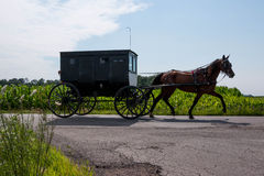 Amish Horse and Buggy. An Amish style black buggy drawn by horse in rural Indiana, United States Stock Photo