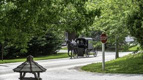 Amish Horse and Buggy 6 stock images