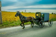 An Amish horse and carriage travels on a rural road in Lancaster County,Pennsylvania.  Stock Image