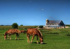 Amish Horse Farm. Horses grazing in a field in front of an Amish farm in Lancaster County, Pennsylvania, (USA stock image