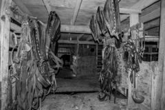 Amish horse tack room. Black and white photo of harness,bridles,halters,reins and other horse tack hanging in an Amish horse barn in Arthur Illonois royalty free stock image