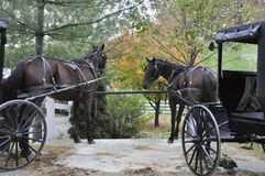 Amish Horses and Carriages Royalty Free Stock Photos