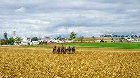Amish kraj, PA fotografia royalty free