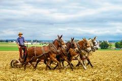 Amish kraj, PA obrazy stock