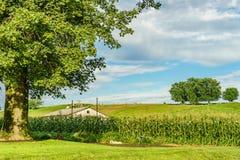 Amish kraju rolnego pola węże elastyczni w Lancaster i rolnictwo, PA fotografia stock