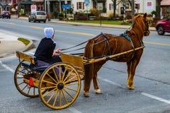 Amish kvinna med två hjul Buggy8 Royaltyfria Bilder