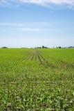 Amish lantgård och havrefält fotografering för bildbyråer