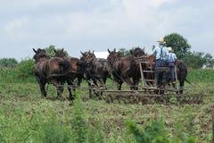 Amish män på arbete Arkivbilder