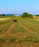 Amish mężczyzna i drużyna cztery konia orzemy alfalfa pole fotografia stock