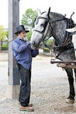 Amish Man Preparing His Horse for the Day's Labor. An Amish man preparing his horse to pull a wagon.  (Wagon is not in image Royalty Free Stock Photo