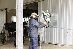 Amish Man Preparing His Horse for a ride Royalty Free Stock Images