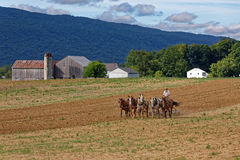 Amish Man Tilling Soil With a Team of Horses Royalty Free Stock Images