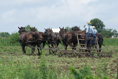 Two Amish farmers at work Stock Images
