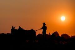 Amish mientras que cultiva con los caballos en la puesta del sol Foto de archivo libre de regalías