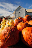 Amish  pumpkin Harvest Royalty Free Stock Photos