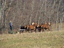 Amish que aran el campo en primavera Foto de archivo libre de regalías