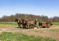 Amish que consiguen los campos listos Foto de archivo