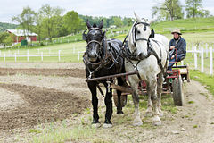 Amish Relaxed on His Cultivator Royalty Free Stock Images