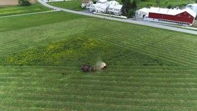 Amish robotnik rolny zbiera pole w wiośnie z 4 koniami i 3 psami widzieć trutniem jak zdjęcie wideo
