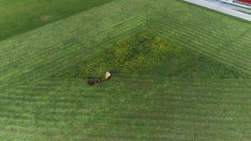 Amish robotnik rolny zbiera pole w wiośnie z 4 koniami i 3 psami widzieć trutniem jak zbiory wideo