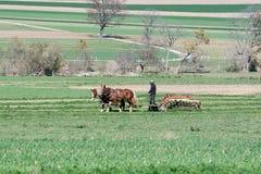 amish rolnik Zdjęcie Stock