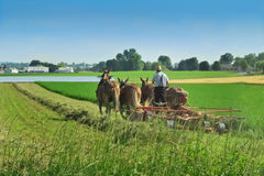 Amish rolnik w Lancaster, PA zdjęcia royalty free