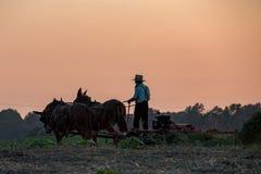 Amish tout en cultivant avec des chevaux au coucher du soleil Photos libres de droits
