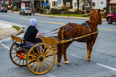 Amish Woman with Two Wheel Buggy8 Royalty Free Stock Images