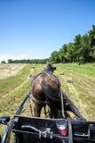 Amishhouwer op een hooigebied stock afbeeldingen