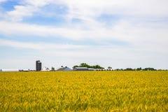 Amishlandbouwbedrijf en tarwegebied stock foto's