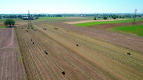 Amishlandbouwer Harvesting Crop Drone stock video