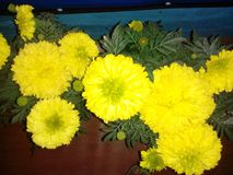 Amistad amarilla natural de la flor del color imagen de archivo