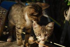 Amistad de gatitos Foto de archivo libre de regalías