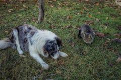 Amistad del gato y del perro fotografía de archivo libre de regalías