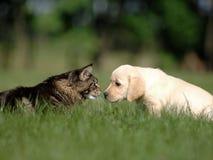Amistad del perro y del gato Imagen de archivo libre de regalías