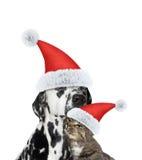 Amitié étroite entre le chat de Santa et le chien Image stock