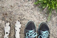 Amitié étroite entre le chien et son propriétaire Image stock